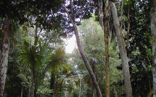 guatemala urwald