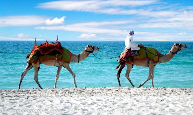 Dubai Strand mit Kamel