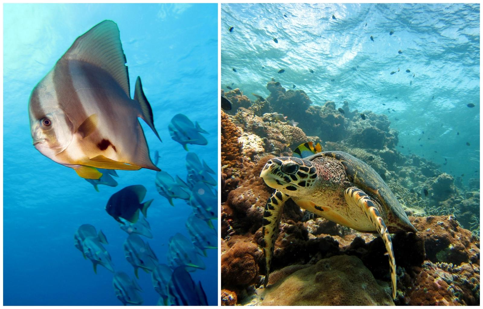 TUI_Malediven_Schildkröte_Fisch_Unterwasserwelt_Schnorcheln_Tauchen