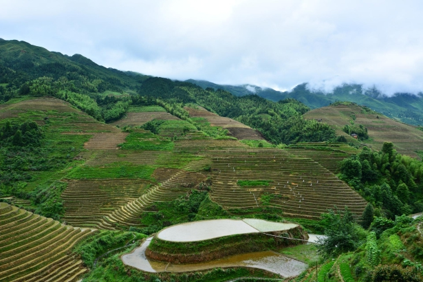 mterrace-rice-fields-Bali-Indonesia-062614C719FB22F9