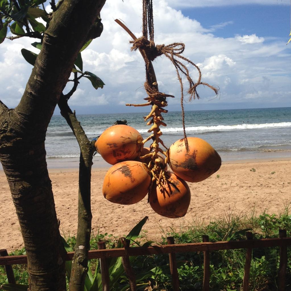 Sri Lanka_Straende_Strand_Bucht_Kokosnuss