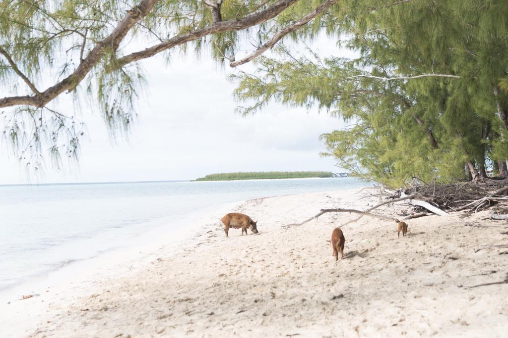 thelionheaded.com+ladyvenom-bahamas-4