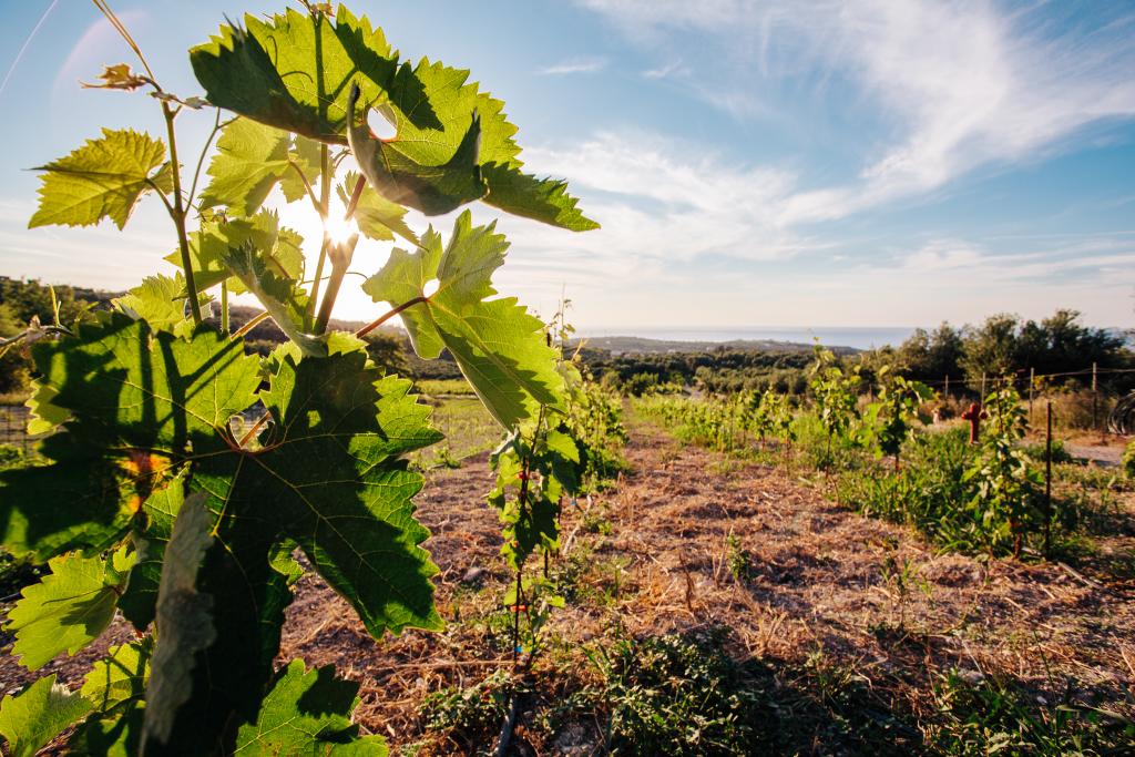 Kreta_Rethymno_Agreco Farm_Grecotel