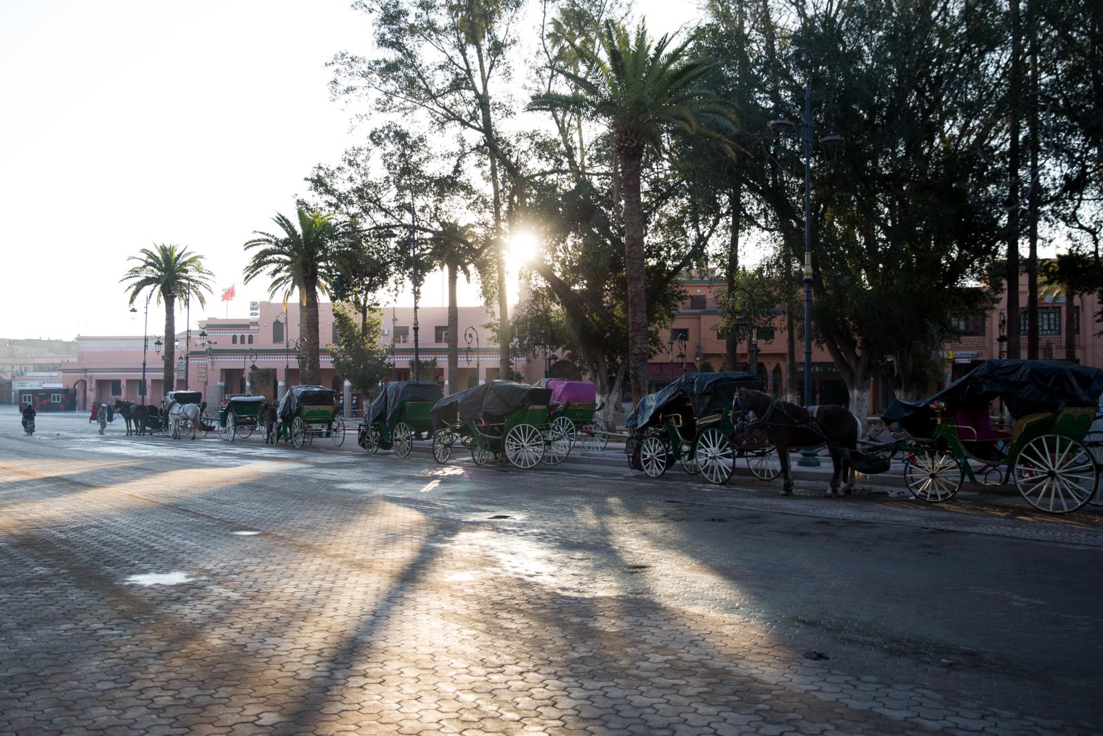 72h Marrakesch_TUI_Pferdekutschen im Sonnenaufgang