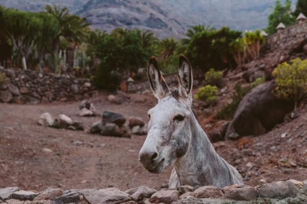 Begegnungen in Gran Canaria