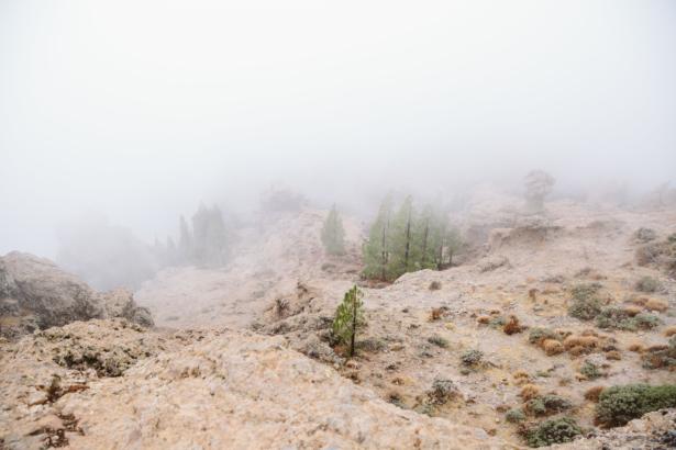 Nebel in Gran Canaria