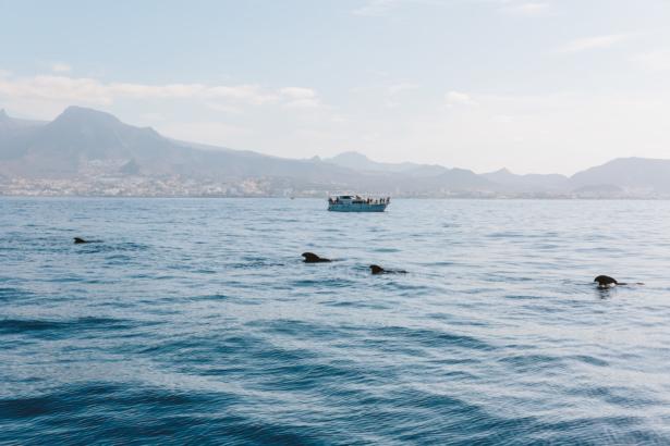 Walbeobachtung Teneriffa