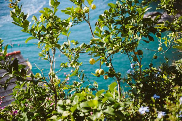 Zitronenbäume in Manarola
