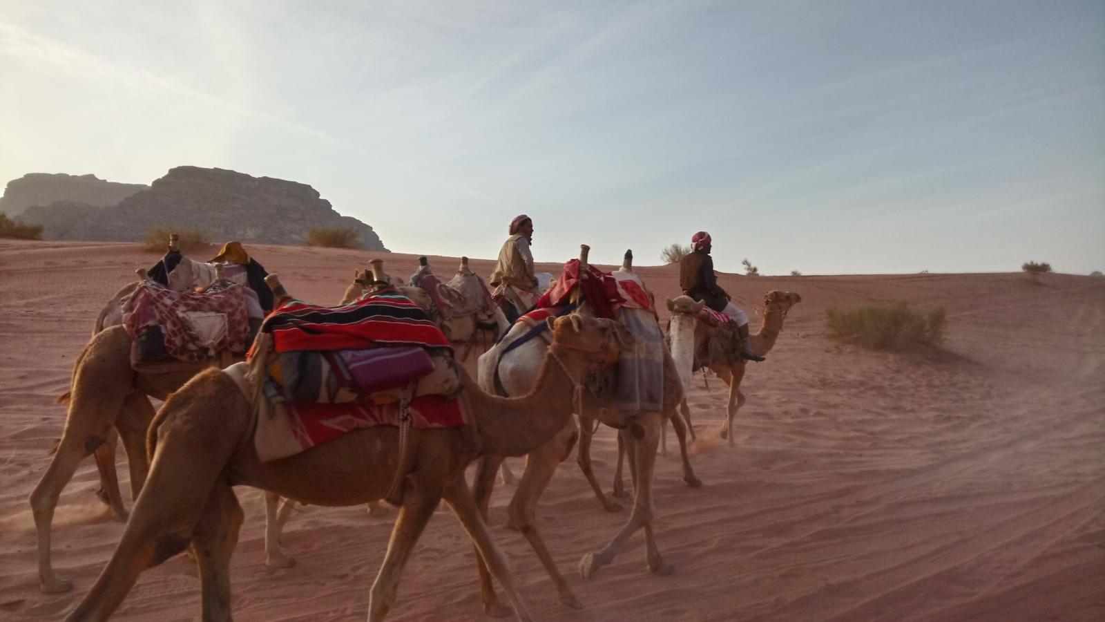 TUI_Jordanien_Wadi Rum_Kamele