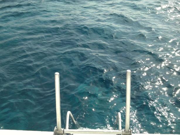 TUI_Jordanien_Rotes Meer_Schiffstour_Schnorcheln_Unterwasser_Meer