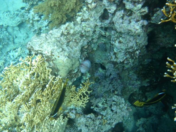 TUI_Jordanien_Rotes Meer_Schiffstour_Schnorcheln_Unterwasser_Meer_Fische_Korallen