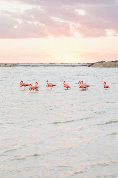 Flamingos in Las Coloradas Yucatan