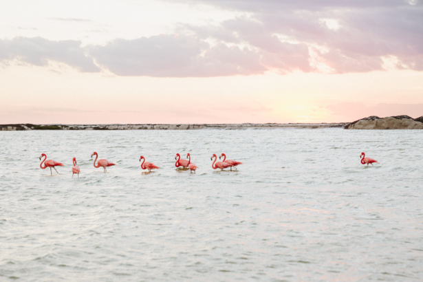 Flamingos in Mexiko - Las Coloradas