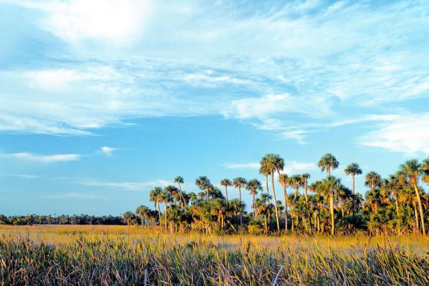 TUI_USA_Everglades