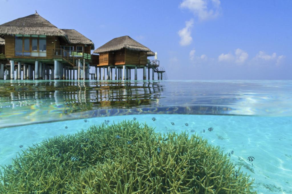Maafushivaru Malediven Hotel TUI Blog Reisen Fernreise Meer Strand Insel Bungalow Overwaterbungalow Honeymoon Tauchen Schnorcheln