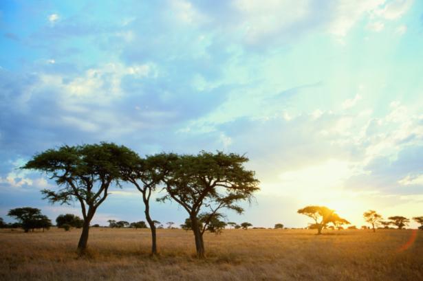 Moskitoschutz_Safari_Fernreisen_Reisetipp