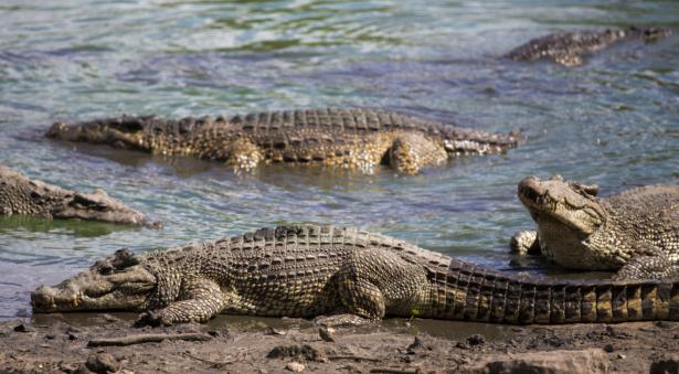 Durch das Herz Kubas_Krokodilfarm in Guamá_Rundreisen