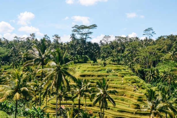 Scootertour-Bali-Reisterassen-Reisetipps-Tui-Blog