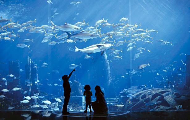Dubai_Atlantis the Palm_TUI_TUIReiseexperten_Fische_Aquarium