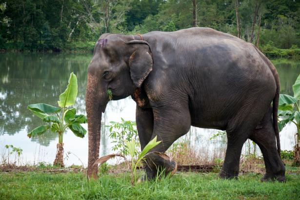 Thailand_Elephant Seaside Retreat Khao Lak_11 2017_(c)TUI Florian Albert. (1)