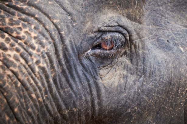 Thailand_Elephant Seaside Retreat Khao Lak_11 2017_(c)TUI Florian Albert. (14)
