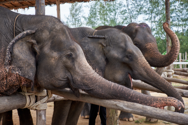Thailand_Elephant Seaside Retreat Khao Lak_11 2017_(c)TUI Florian Albert. (17)
