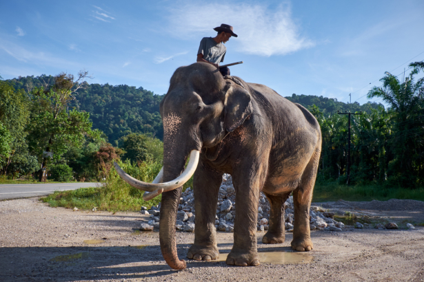 Thailand_Khao Sok Nationalpark_11 2017_(c)TUI Florian Albert. (8)