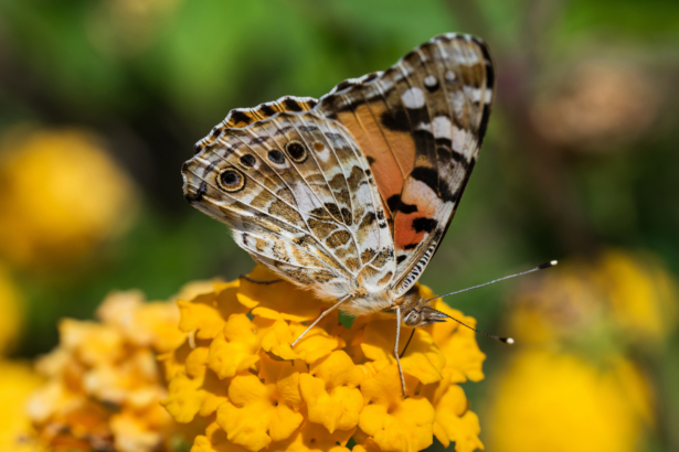 TUI Rhodos Schmetterling
