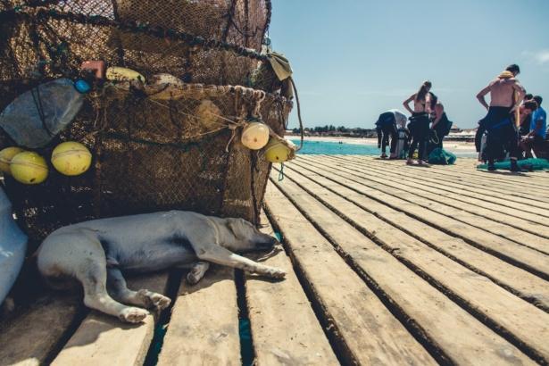 Kapverden Nelly Hund am Pier