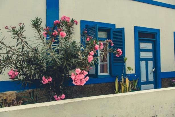 Kapverden Nelly Palmeira Haus mit Pflanzen