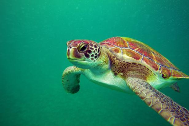 TUI-Meeresschildkröten