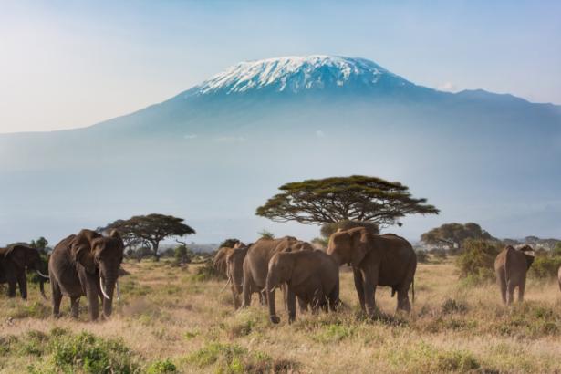 TUI Safari Kenia