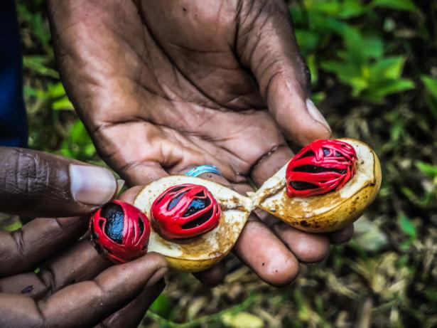 TUI Sansibar Gewürzplantage