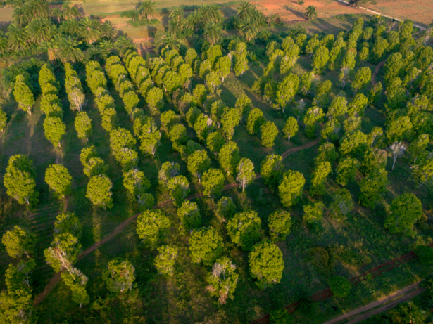 TUI Sansibar Gewürzplantagen