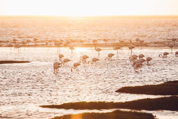 Flamingos bei Walvis Bay Namibia