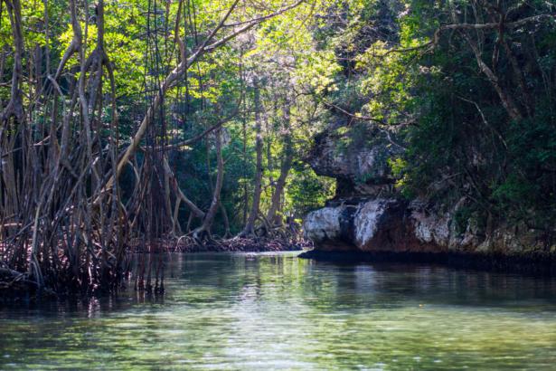 TUI Los Haitises Nationalpark