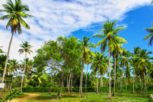 TUI Samana Palmengarten