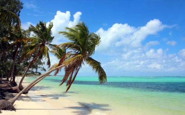 TUI Dominikanische Republik - Baravo Strand Palmen