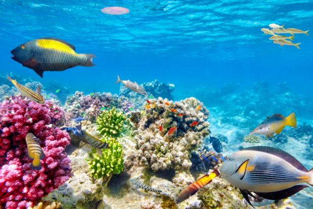 Meer Ägypten