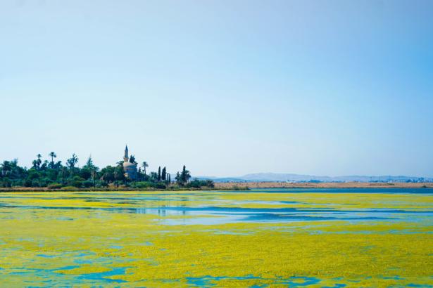 Zypern Moschee Salzsee Larnaka