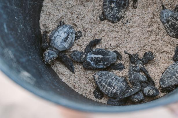 Project Biodiversity Turtle Foundation TUI Care Foundation Sal Kapverden